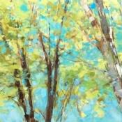 20x60 Tree Canopy*